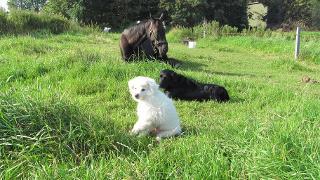 Pferd Püppi mit Dörte & Oskar