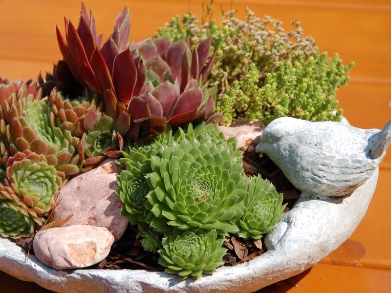Kleine Anpflanzung, geschenkt von lieben Gästen