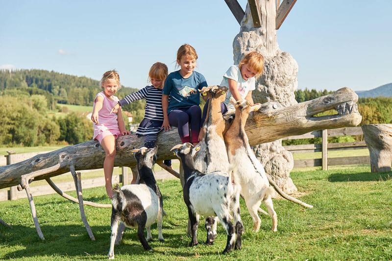 Neugierige Ziegen am Hof / Rechteinhaber: © Familienferienhof Wenighof