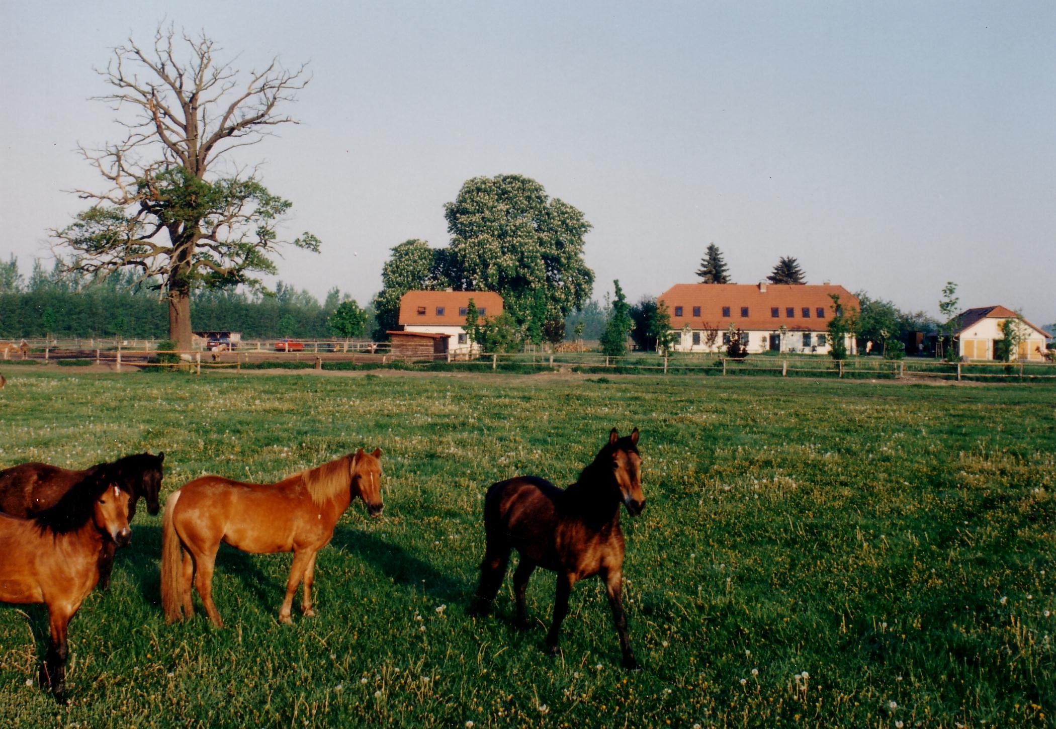 50 ha Weideland bieten viel Platz für artgerechte Pferdehaltung