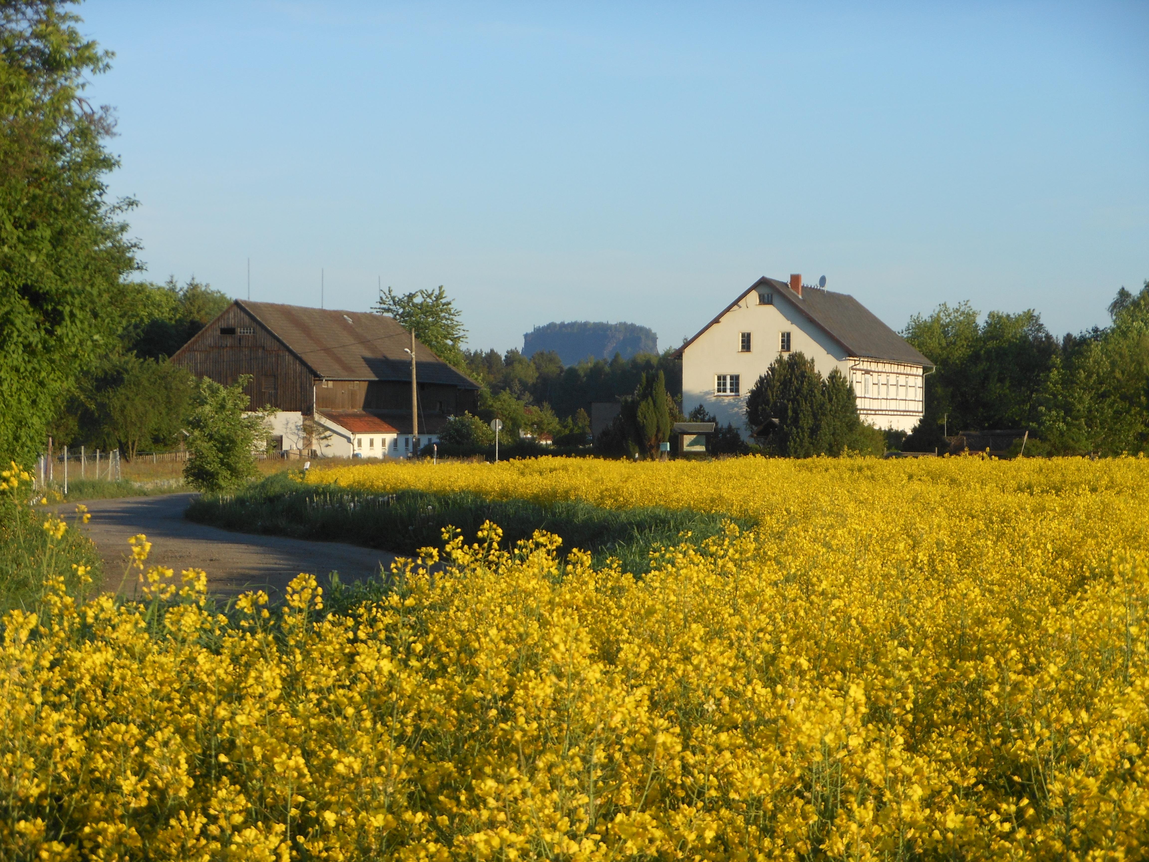 Im Hintergrund der Lilienstein, das Wahrzeichen des Nationalparks Sächsische Schweiz