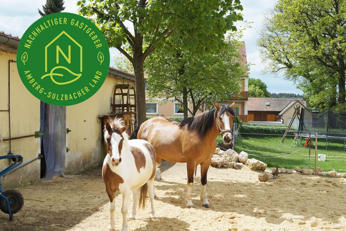 wöchentlich geführtes Pony reiten für Gäste-Kinder ab 3 Jahren