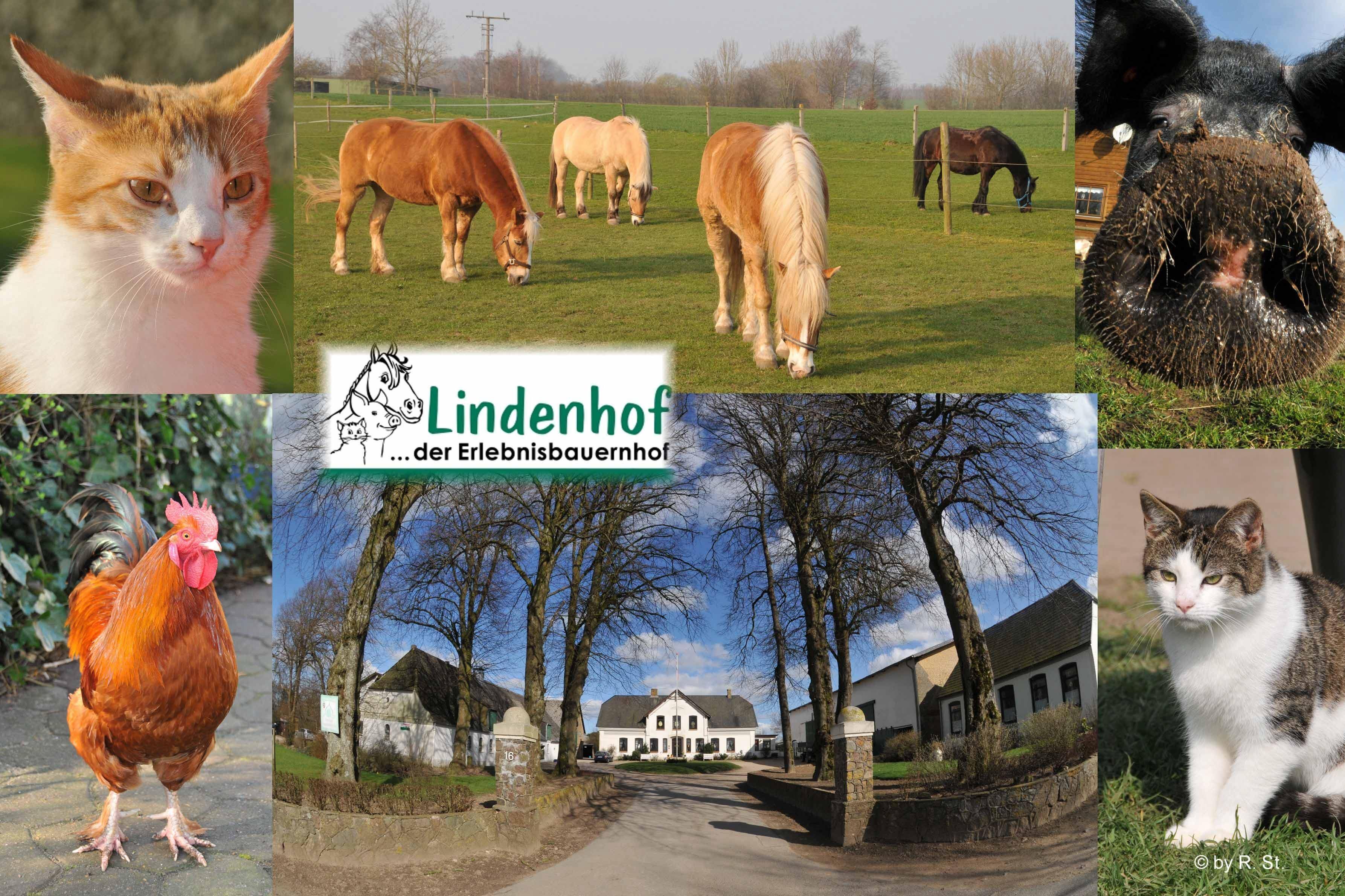 """Den """"LINDENHOF"""" kann man aufgund seiner Struktur als modernen """"Bilderbuch-Bauernhof"""" bezeichnen !"""
