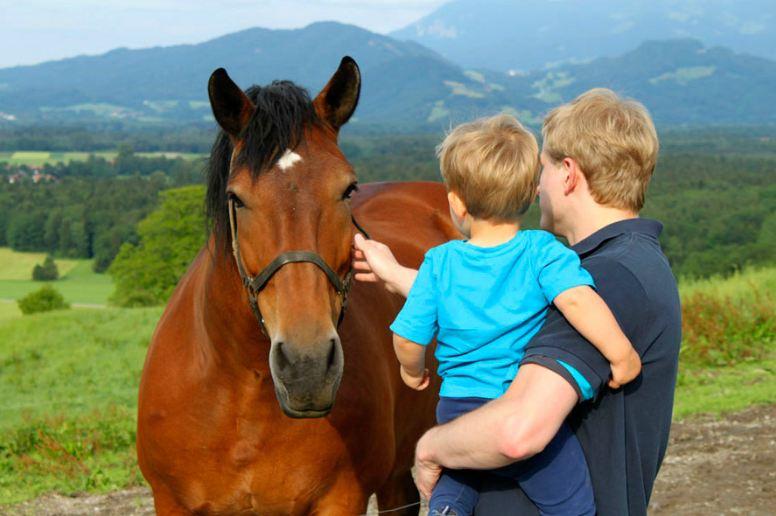 Unsere Pferde wollen gerne von Euch gestreicheltund gefüttert werden