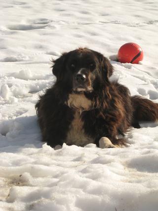 Unser Hofhund im Schnee