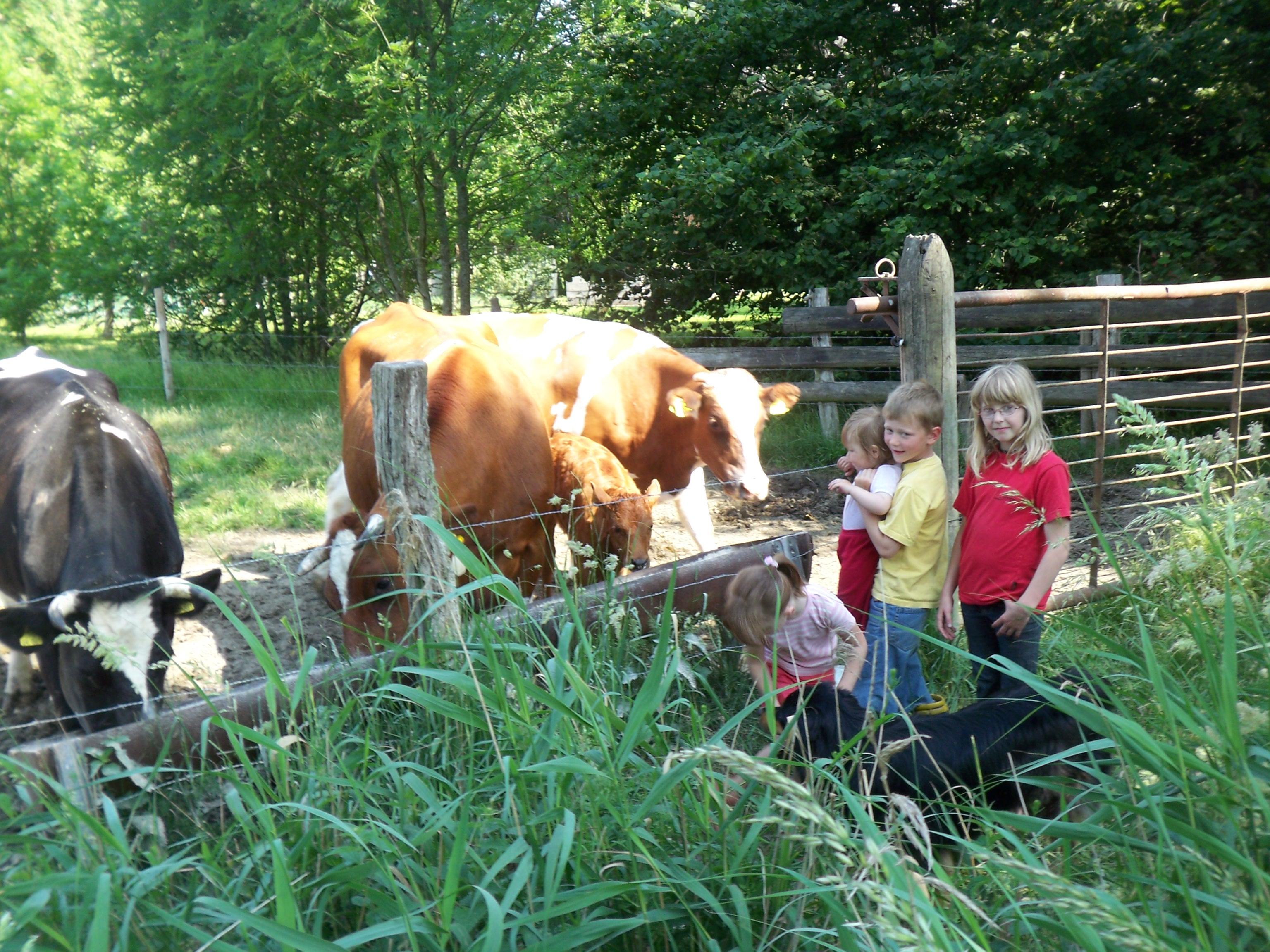 Bei uns können die Kinder lernen, wie die Tiere gefüttert und gepflegt werden!