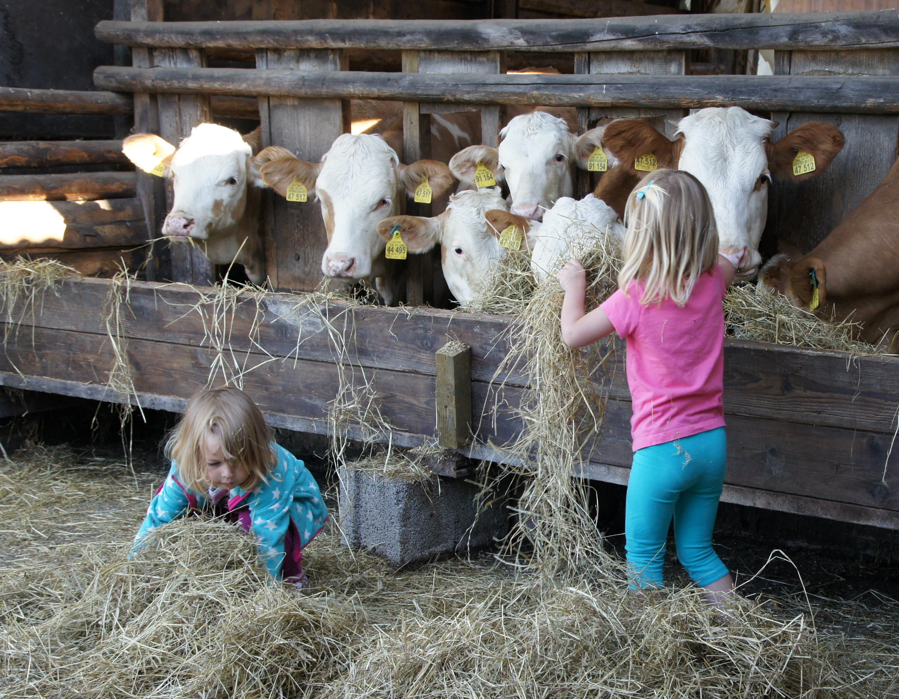 Unsere Kälber freuen sich über fleißige Fütterer!