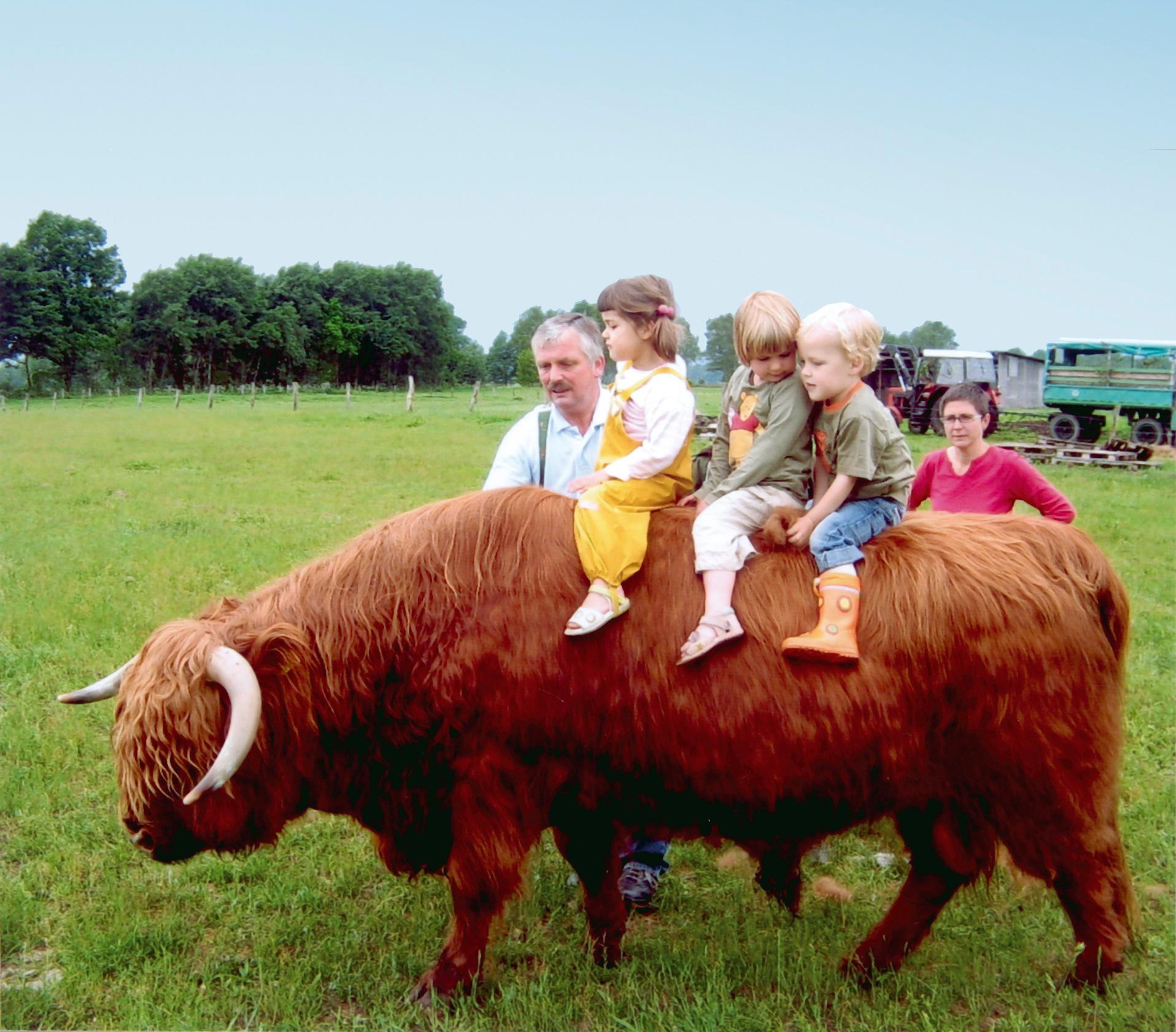 Unser Highlandbulle Gustel ist so zutraulich, dass mutige Kinder auf ihm Platz nehmen können.
