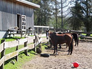 Pferde&Ponies