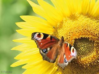 Edelweiss Sommer-Sonnenstunden