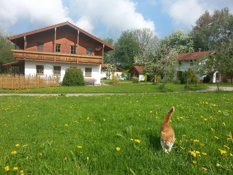 Rechts vom Bauernhaus liegen die Ferienhäuser sehr idyllisch im Obstgarten