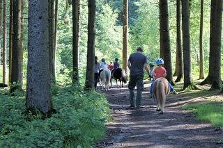 Ausritt in den Wald
