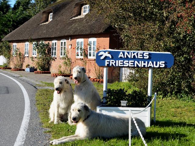 Ankes Friesenhaus (Emmelsbüll-Horsbüll). Ferienwohnung in Deutschland