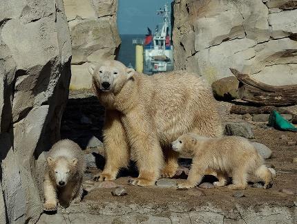 Ticket Eintritt Zoo Familie (1 + 2) (1 Erw. + 2 Kinder)