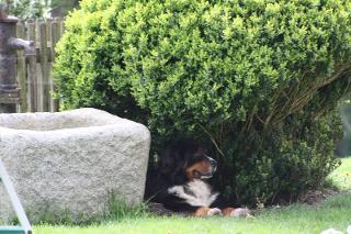 Brunnen mit Hund