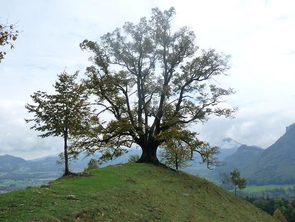 Zauberhafte Welt der Bäume - Bergwaldwanderung im Herbst