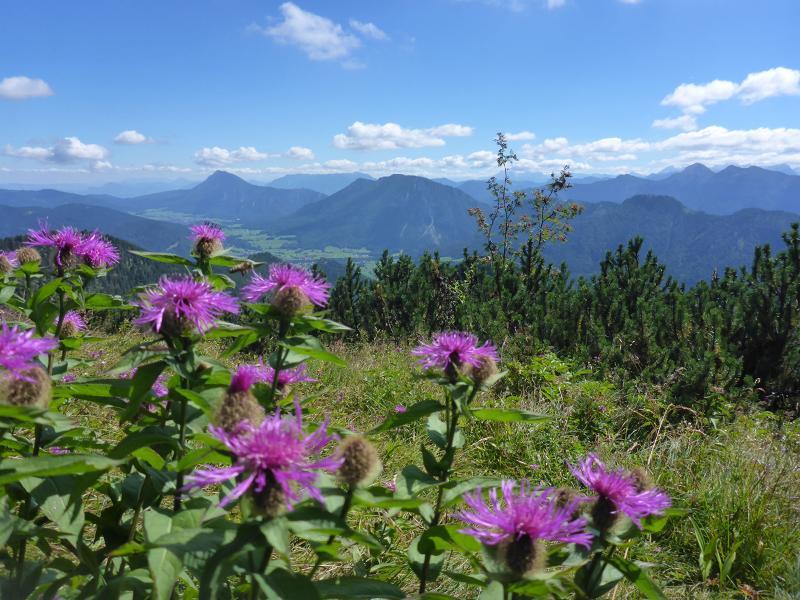SalzAlpenSteig zum Kennenlernen - Geführte Hüttenwanderung im Chiemgau