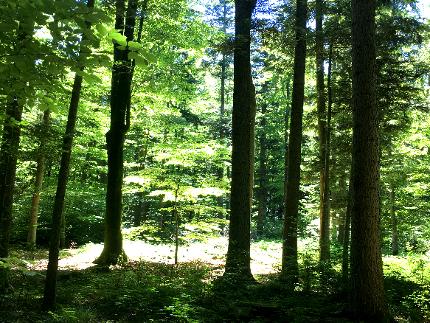 """Shinrin Yoku """"Waldbaden"""" - Heilwanderung"""
