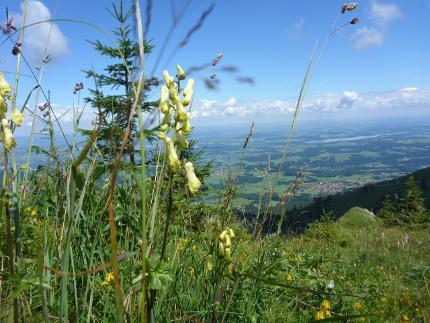 """""""Johannistrauß und Immenbaum"""" - Kräuterwanderung zur Sommersonnenwende"""