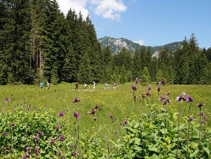 """Seele trifft Natur"" - achtsam wandern im Chiemsee-Alpenland"