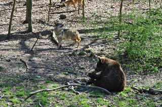 Naturzentrum Wildpark Knüll