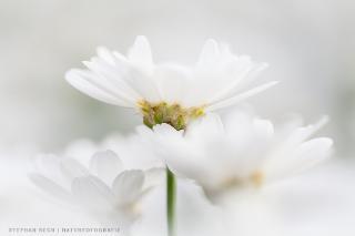 Blütenzauber / Urheber: Stephan Rech | FOTOGRAFIE / Rechteinhaber: © Stephan Rech | FOTOGRAFIE