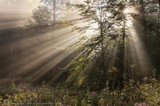 Morgens im Wald / Urheber: Stephan Rech | FOTOGRAFIE / Rechteinhaber: © Stephan Rech | FOTOGRAFIE