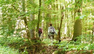 Wandern im schönen Reinhardswald / Urheber: WildnisLebenswege / Rechteinhaber: © WildnisLebenswege