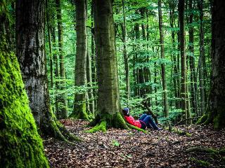 Selbstzeit im Wald - Ruhe finden / Urheber: Stefan Pruschwitz / Rechteinhaber: © Sehnsucht Wald - Waldbaden mit Stefan Pruschwitz