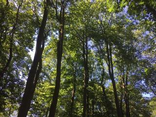 Wald bei Borken (Hessen) / Urheber: Sehnsucht Wald - Waldbaden mit Stefan Pruschwitz / Rechteinhaber: © Sehnsucht Wald - Waldbaden mit Stefan Pruschwitz