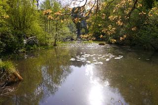 Blick_auf_den_Teich