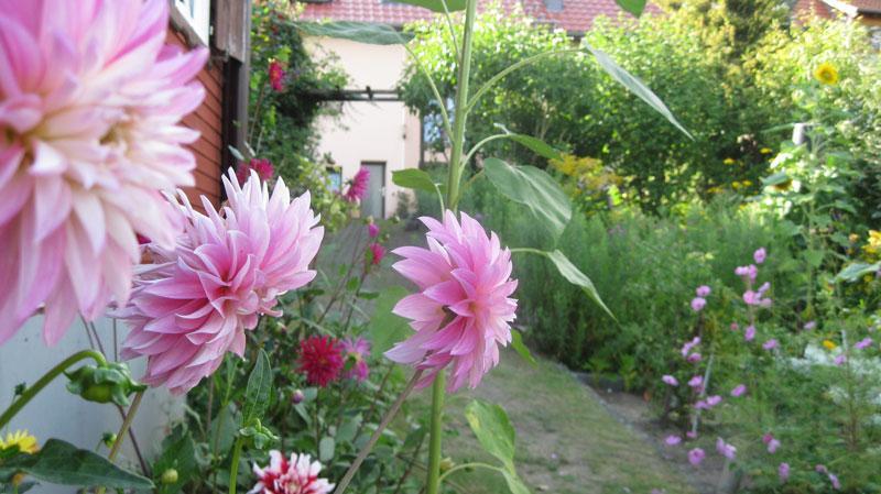 Blick_in_den_Garten.jpg