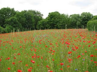 Feld bei Dahmsdorf