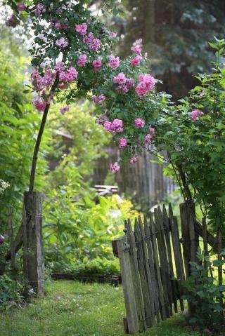 Rosen_im_Garten